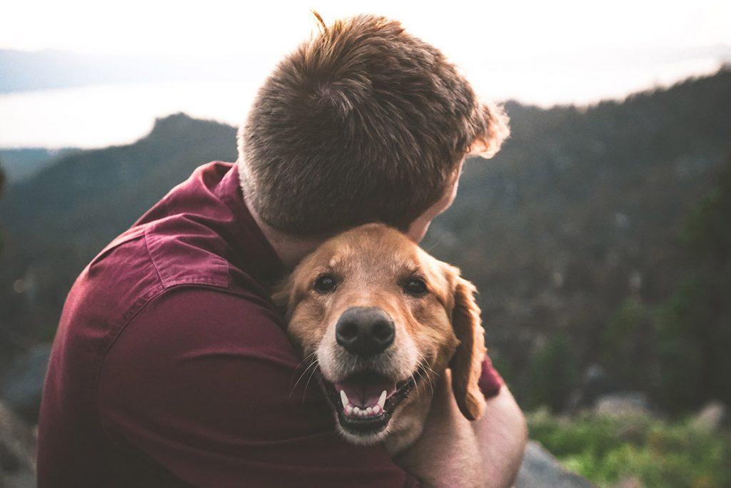 huisdier voordeel